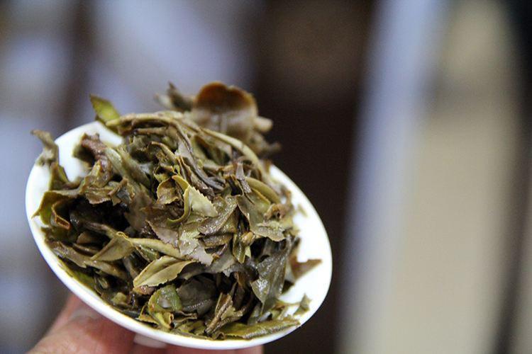 福鼎白牡丹白茶价格表